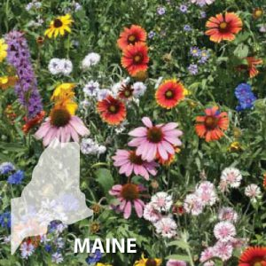 Maine-Wildflower-Seeds.jpg