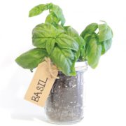 Mason-Jar-Basil-Herb-Kit.jpg