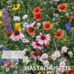 Massachusetts-Wildflower-Seed.jpg
