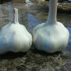 Mattchi-Garlic-Bulbs