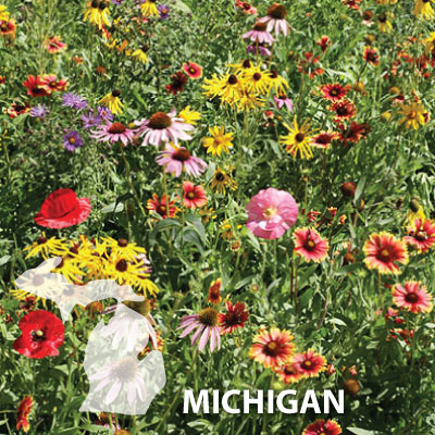 Michigan Blend Wildflower Seed Urban Farmer Seeds
