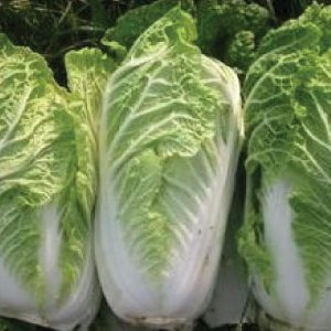 michihli-cabbage-seeds