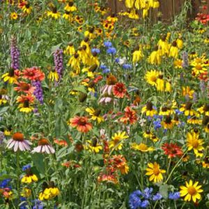 Midwest_Wildflower_Seed_Mix.jpg