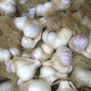 Mild_French_Garlic_Bulbs.jpg
