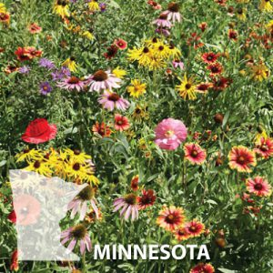 Minnesota-Wildflower-Seed.jpg