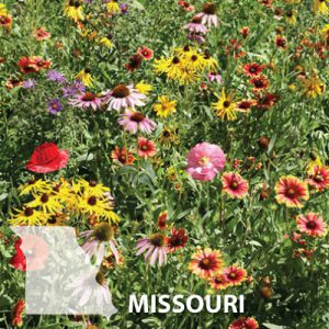 Missouri-WIldflower-Seed.jpg