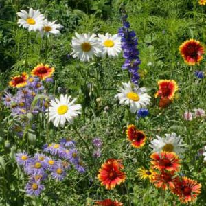 Mountain_Wildflower_Seed_Mix.jpg