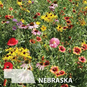 Nebraska-Wildflower-Seed.jpg