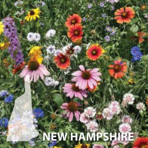 New-Hampshire-Wildflower-Seeds.jpg