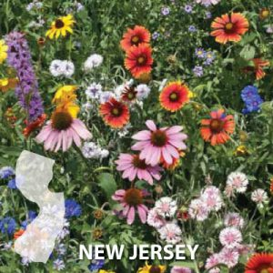New-Jersey-Wildflower-Seeds.jpg