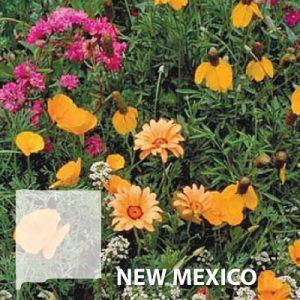 New-Mexico-Wildflower-Seed.jpg
