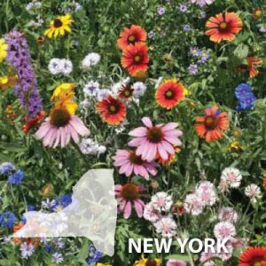 New-York-Wildflower-Seed.jpg