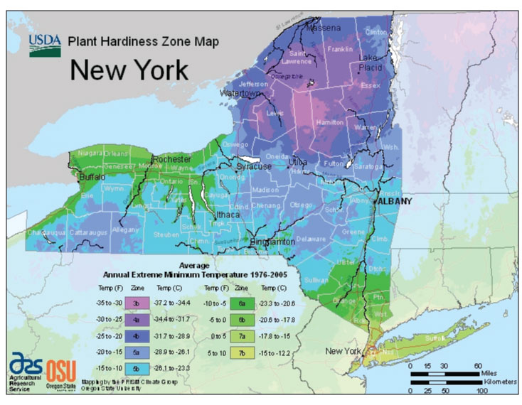 New York Zone Hardiness Map
