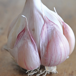 nootka-rose-garlic-bulbs