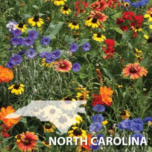 North-Carolina-Wildflower-Seeds.jpg