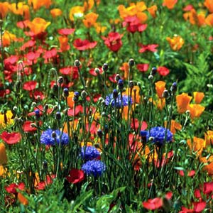 North_American_Wildflower_Seed_Mix.jpg
