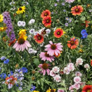 Northeast_Wildflower_Seed_Mix.jpg