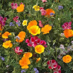Northwest_Wildflower_Seed_Mix.jpg