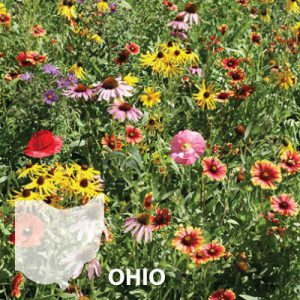 Ohio-Wildflower-Seed.jpg