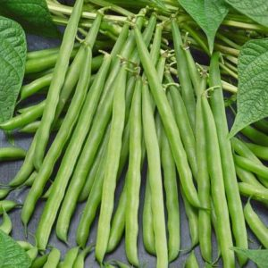 Organic French Garden Bean