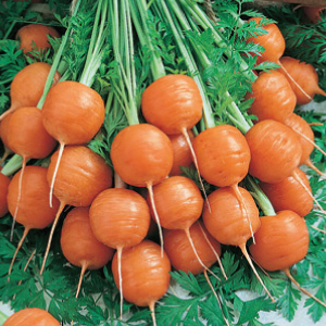 Parisian-Carrot-Seeds.jpg