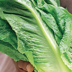 parris-island-cos-lettuce-seeds