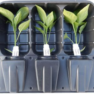 Pepper-Plants-for-Sale.jpg