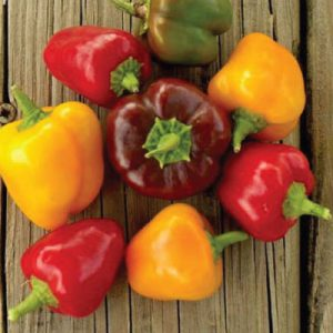 Petite-Mix-Bell-Pepper-Seeds.jpg