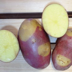 pinto-gold-seed-potatoes-cut