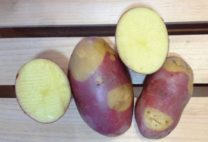 how to cure cut seed potatoes