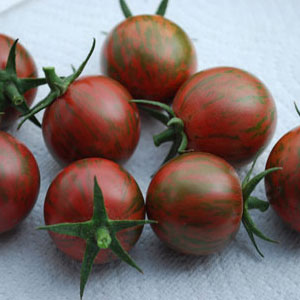 Purple-Bumble-Bee-Tomato-Seeds.jpg