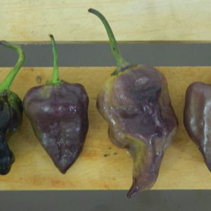 Purple-Ghost-Peppers.jpg