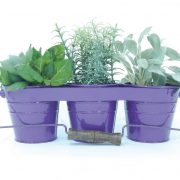 purple-herb-garden-kit