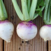 Purple-Top-White-Globe-Turnip-Roots.jpg