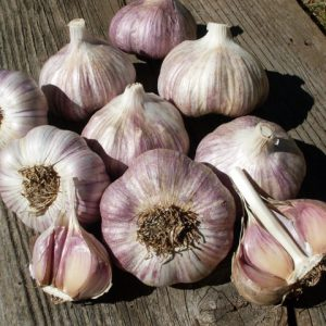 Purple_Glazer_Garlic_Seed.jpg