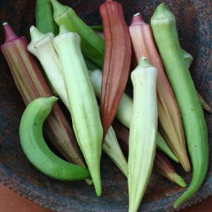 Rainbow-Fiesta-Okra-Seeds