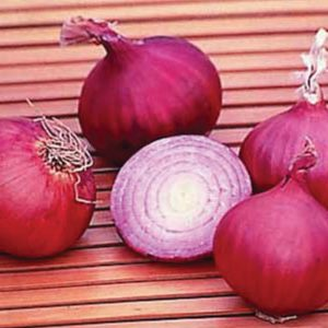 Red-Creole-Onion-Seeds.jpg