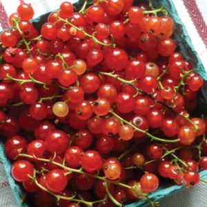 Red-Currant-Tomato.jpg