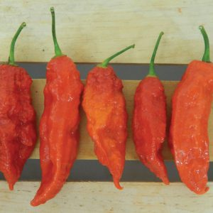 red-ghost-peppers