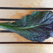 Red-Giant-Mustard-Leaf.jpg