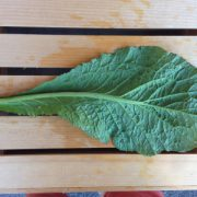 Red-Giant-Mustard-Leaf-Bottom.jpg