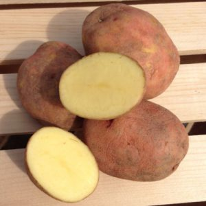 Red-Gold-Seed-Potato-Cut.jpg