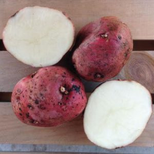 Red-LaSoda-Seed-Potatoes-Cut.jpg
