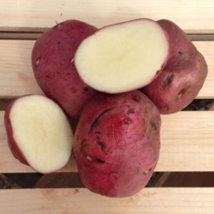 Red-Norland-Seed-Potato-Cut.jpg