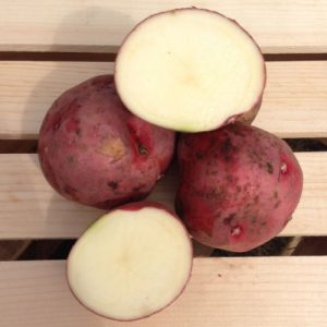 red-pontiac-seed-potato-cut
