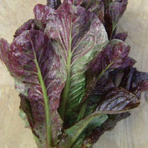 red-romaine-lettuce-seeds