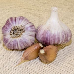 Red-Russian-Garlic-Bulbs