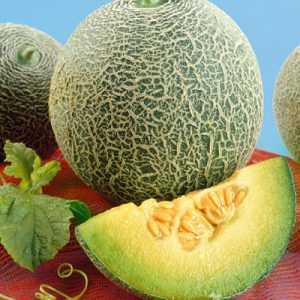 Rocky-Ford-Green-Flesh-Melon-Seeds