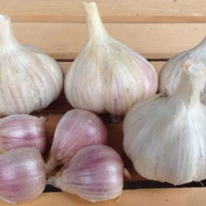 Romainian-Red-Garlic-Bulbs
