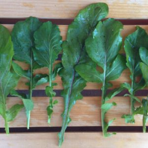Roquette-Arugula-Leaves.jpg